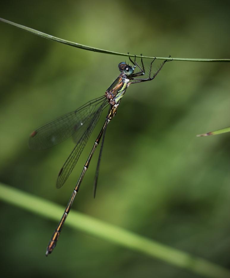 Insectes-bijoux.