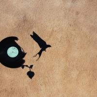 Art2Rue - CLXXIV - Oiseaux2Rue (8).